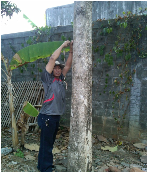 Point measurement of tree diameter by buyer